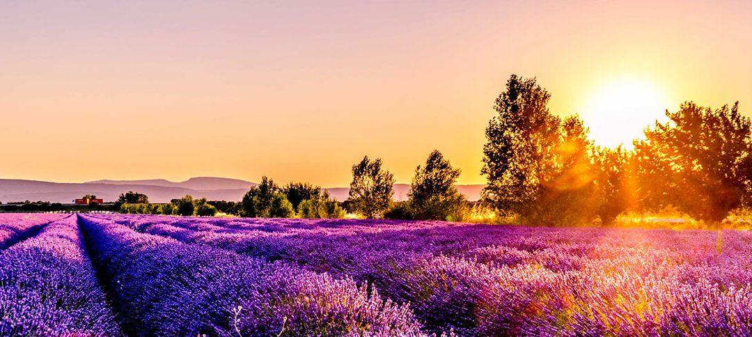 Quel cadeau rapporter de Provence ?